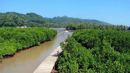 Hutan Mangrove Logending - tempat wisata di kebumen