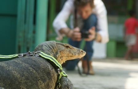 Taman Reptil Kebumen