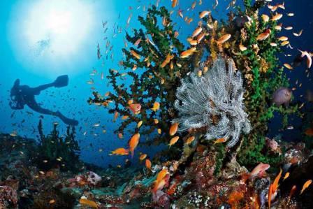 Kegiatan diving wisata di Pulau Weh