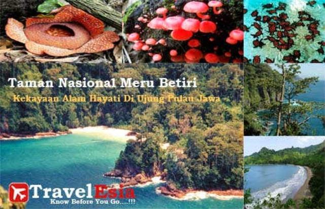 Taman Nasional Meru Betiri Via Inet