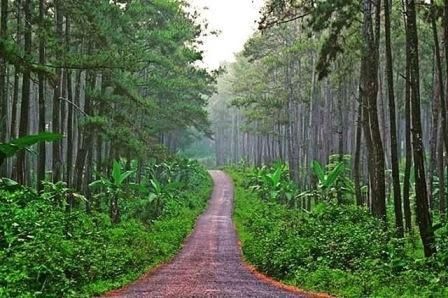 Hutan Pinus Karanggedang