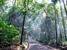 Taman Hutan Raya Banten
