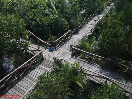 Wisata Hutan Payau(Mangrove)