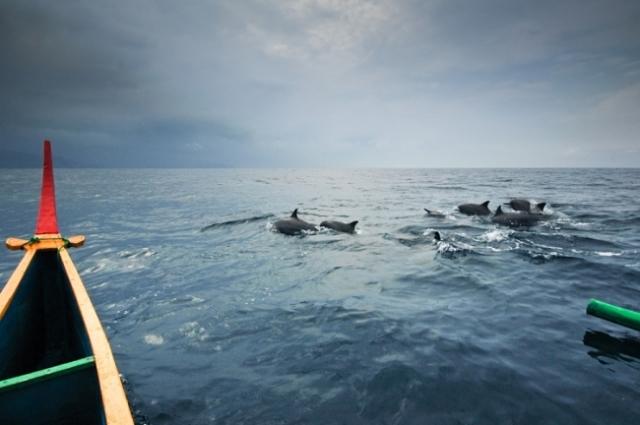 Melihat Lumba-lumba Langsung di Alam