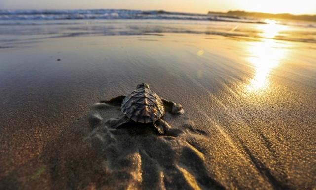 Sunset di Pantai Serang Blitar