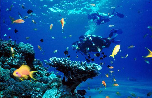 Bawah Laut di Pantai Senggigi