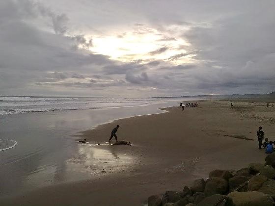 Objek Wisata Pantai Cipatujah