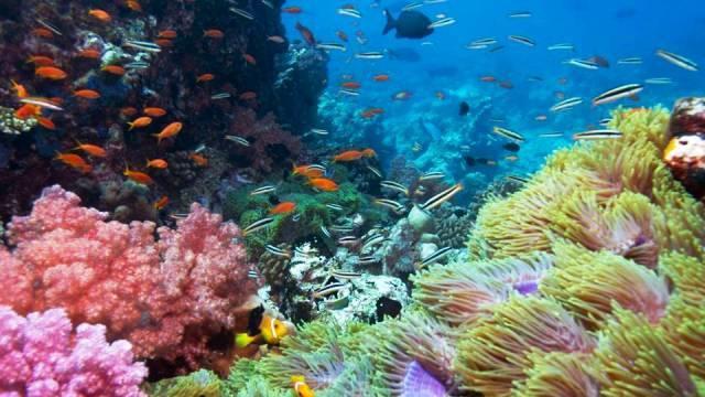 Dunia Bawah Laut Gili Trawangan