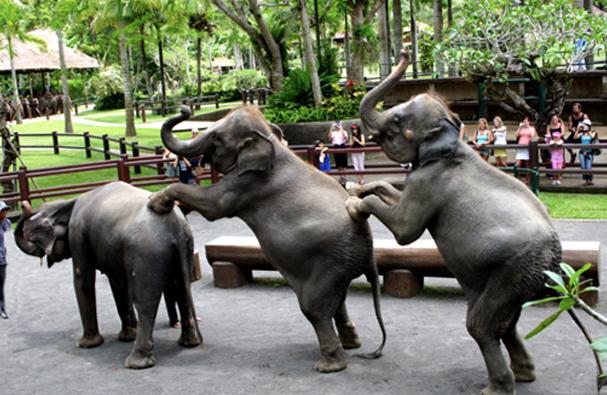 Elephant Sapari Park