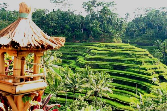 Wisata Desa Ubud via Wisata-bali