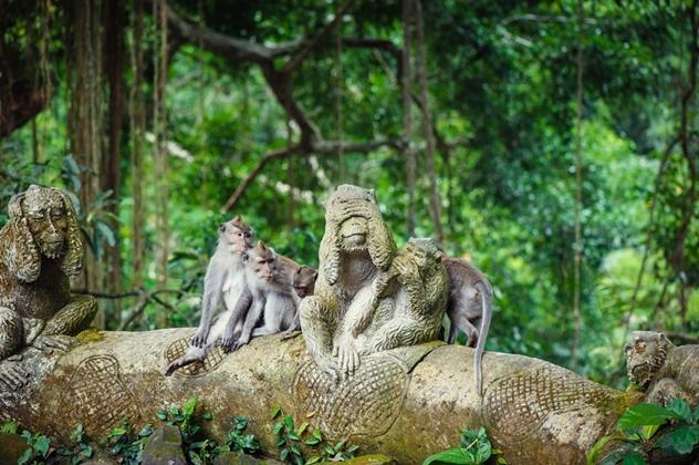 Wisata Monkey Forest via Traveloka
