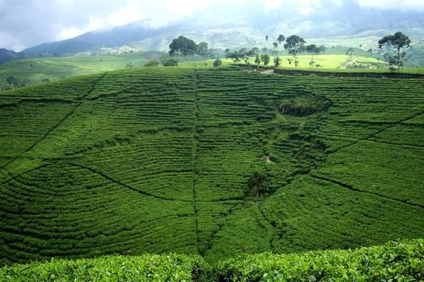Menikmati Kesejukan Kebun Teh Andung Biru via Indonesia Tourism