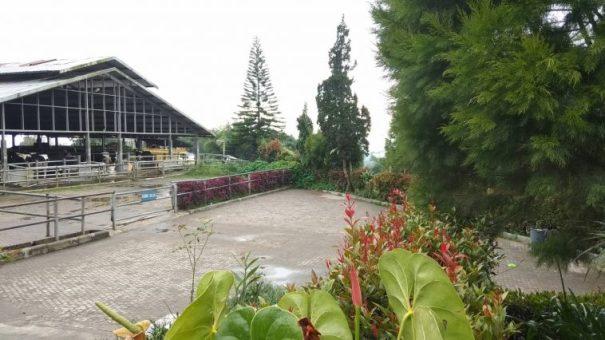 Gundaling Farm Berastagi