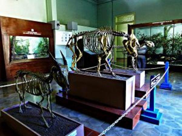 Museum Zoologi via Situsbudaya