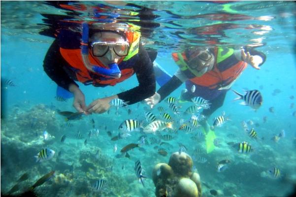 Snorkeling di Pantai Derawan via Tempatwisatauni