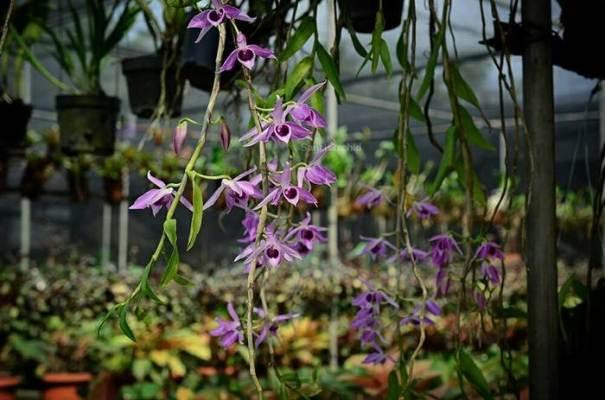 Taman Anggrek Ragunan via @santi_orchid