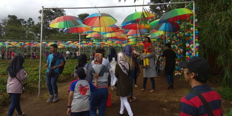 Hiasan payung di Taman Bunga Celosia via Kompas