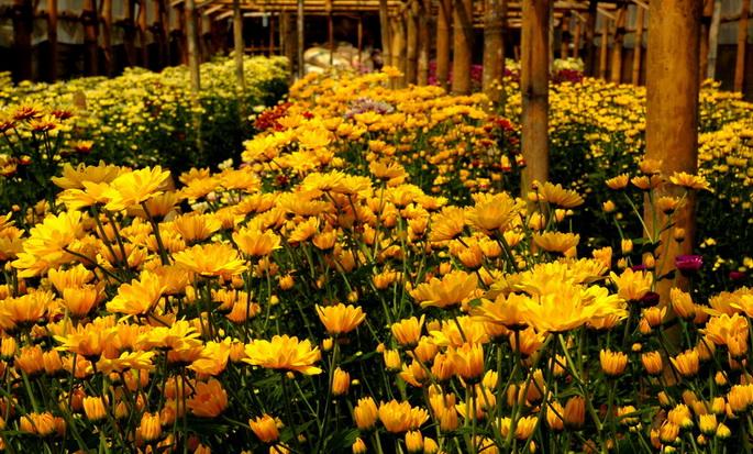 Kebun Bunga Pak Yoto via Myimage