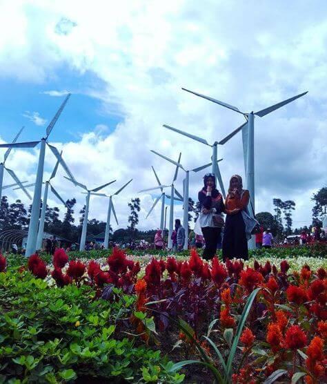Kincir Angin di Taman Bunga Celosia