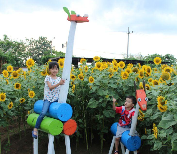 Taman Bunga Matahari Probolinggo