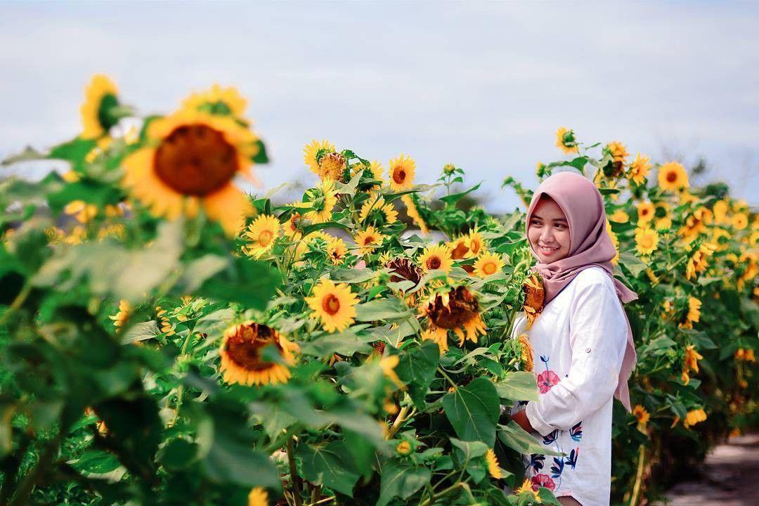 Taman Bunga Matahari di Bantul via @fandiryan