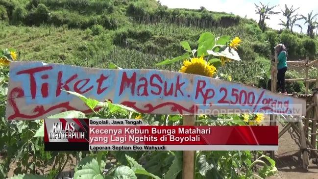 Taman Bunga Matahari di Boyolali via Youtube