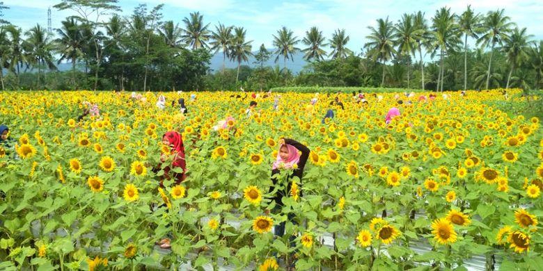 Taman Dewari Magelang via Kompas