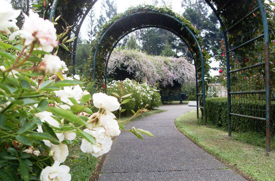 Taman Mawar via Tamanbunganusantara