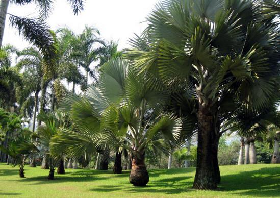 Taman Palem via tamanbunganusantara