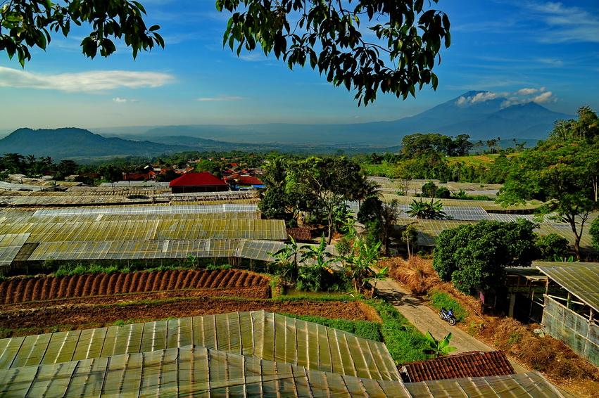 Wisata Kampung Krisan Clapar via Myimage