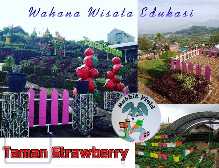 Wisata Taman Sstrawberry