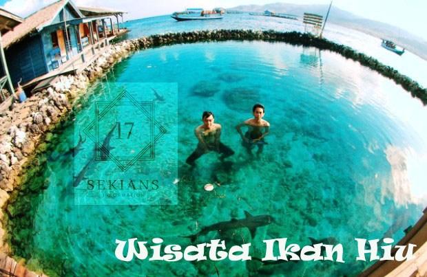 Bermain dengan Hiu di Pulau Serangan via 17sekians