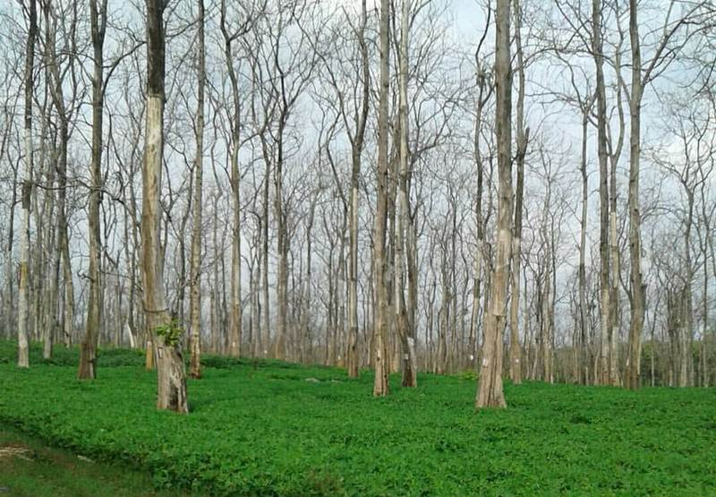 Hutan Jati via @din_ndutz