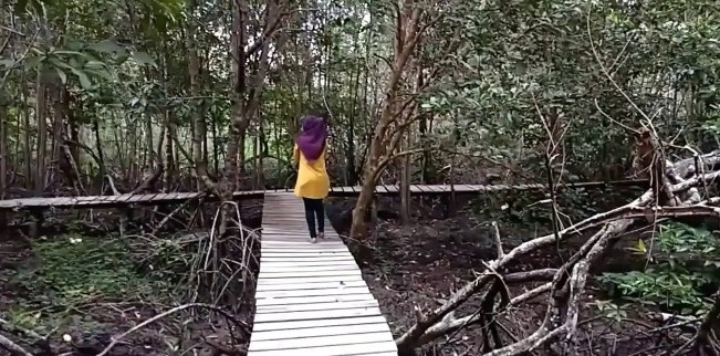 Hutan Mangrove Sebauk via Pakusu Youtube