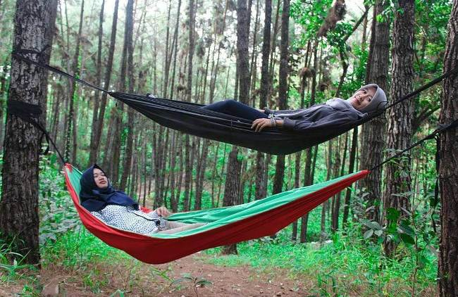 Hutan Pinus Kampar