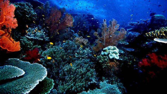 Keindahan Alam Bawah Laut Bunaken