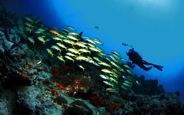 Keindahan Bawah Laut Taman Nasional Bunaken