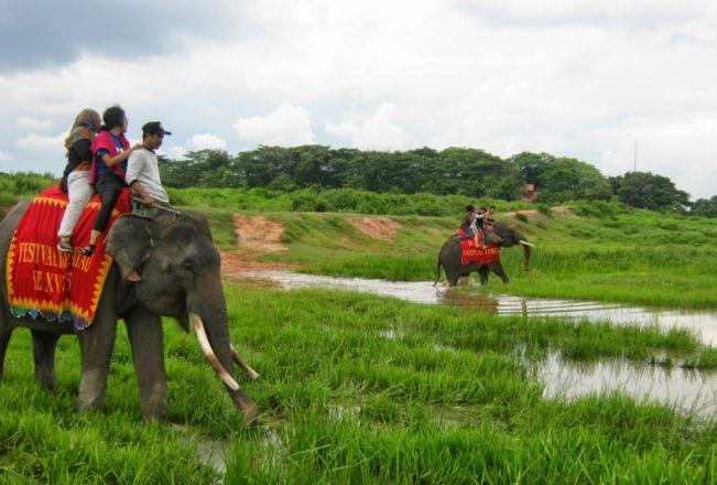 Naik Gajah di Taman Nasional Way Kambas via Daarulaman