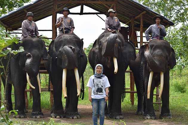 Pusat Pelatihan Gajah