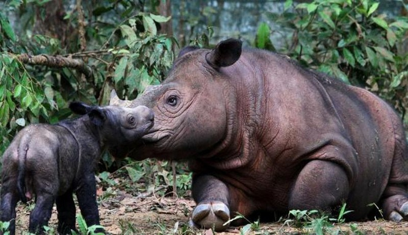 Rhino Sanctuary Taman Nasional Way Kambas