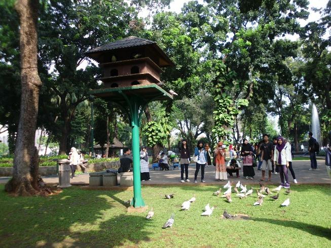 Burung Merpati di Taman Suropati via Ulinulin