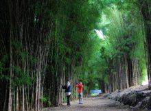 Hutan Bambu Surabaya via HumasSurabaya