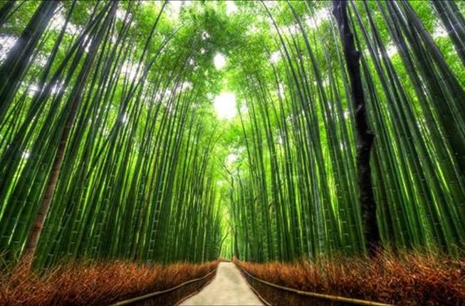 Hutan Sagano Jepang via dsecik