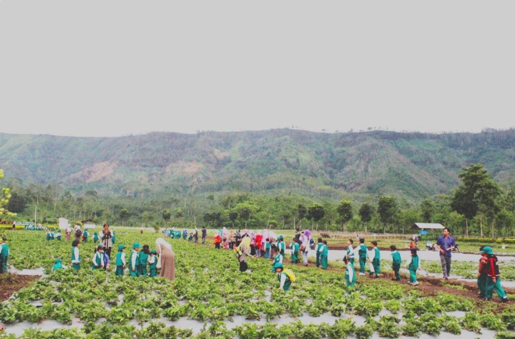 Kebun Stroberi Afdeling Jampit