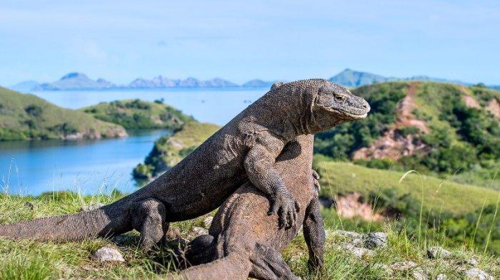 Taman Nasional Komodo via Tribunnews