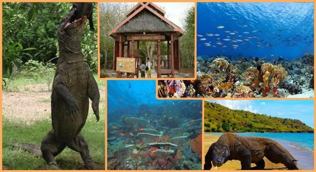 Wonderful Pulau Komodo via Dampangsalenrang