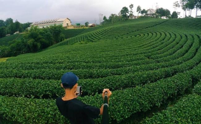 Agrowisata Kebun Teh Cikuya via @iilf.azz