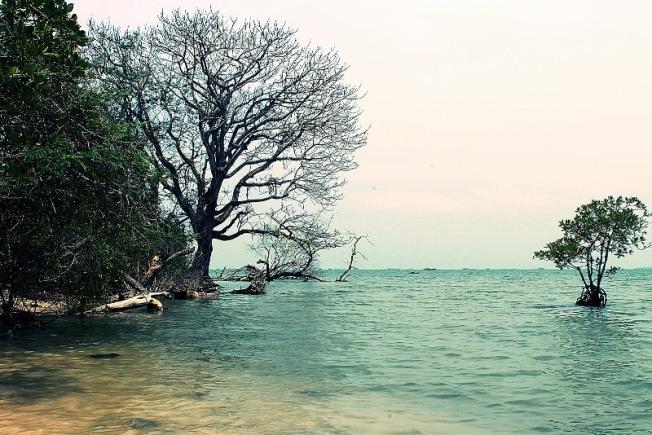 Cagar Alam Pulau Dua via Gpswisataindonesia