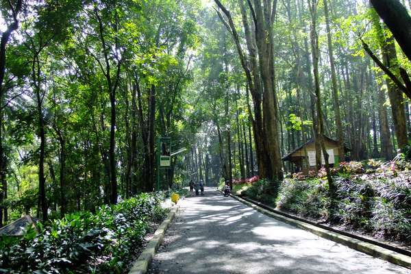 Hutan Kota Jombang via Panduanwisata