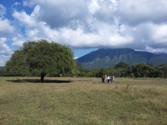 Padang Savana Situbondo via Tripadvisor